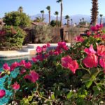Healing In The Desert With Clean Eating And Sunshine
