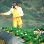 Easy Step To Avoid Pesticides Linked to Cancer, Autoimmunity and More