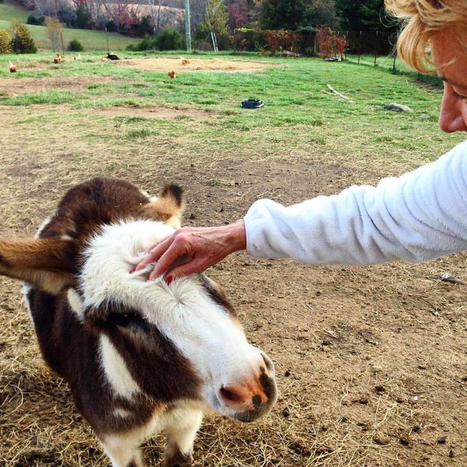 donkey-and-deb