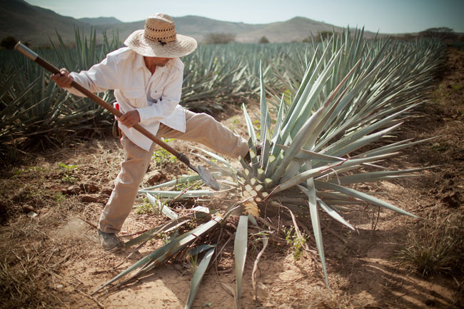tequila-farmer vintage tradition skincare recommended by take back your health