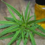 All About CBD Relief Part 1